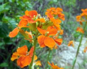 Orange, Flowers, Hike, Arizona