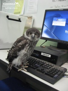 Owl_using_Computer_by_RedPigeon via DeviantArt.com