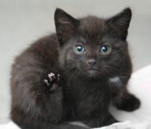 http://www.deviantart.com/art/A-kitten-68838991 titled A Kitten by Ultrakitten via DeviantArt.com